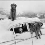 Pets Cold how to prevent