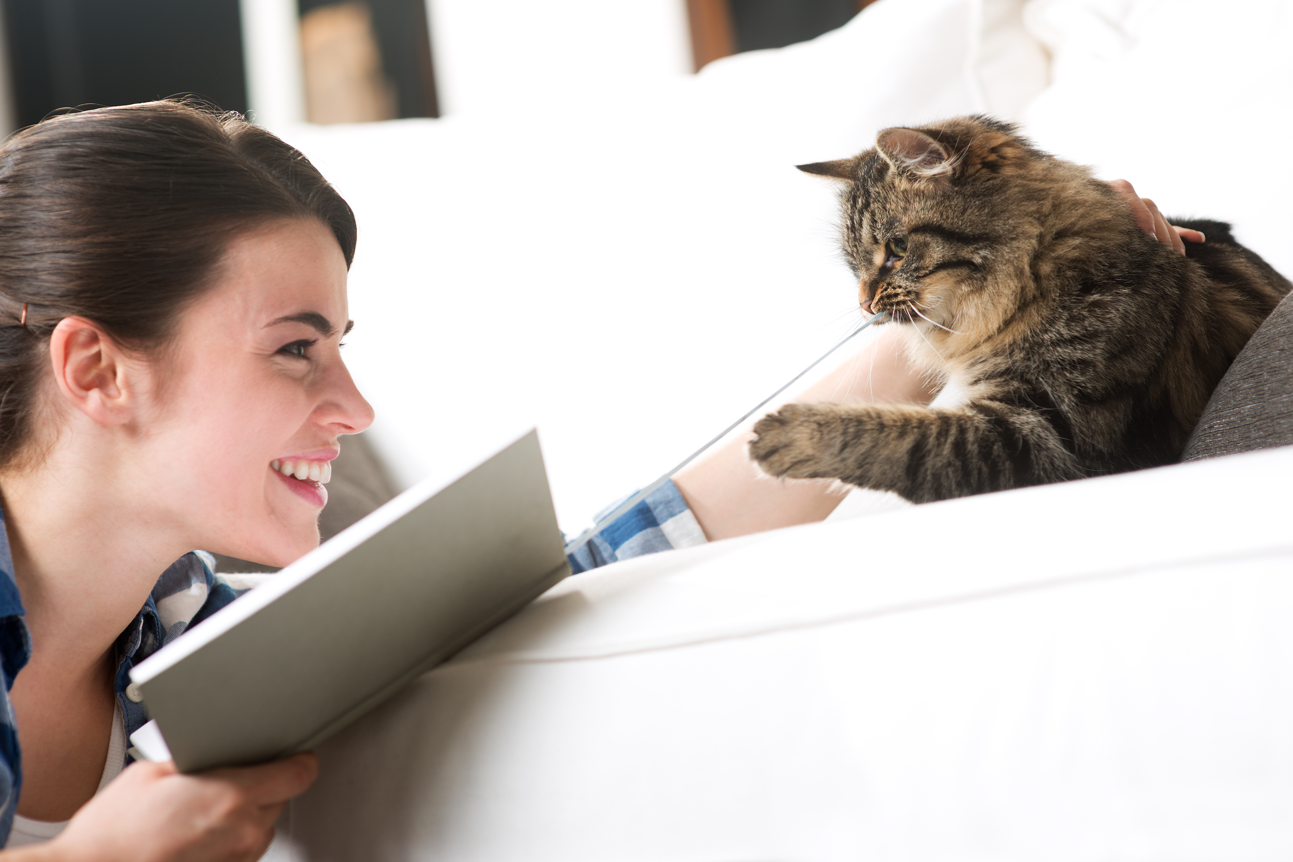 cat tricks easy