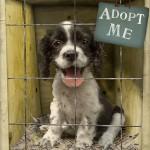 About Dog Adoption and Cat Adoption