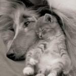 pets have feelings