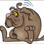 Got fleas poor dog
