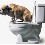 Potty Training your pet