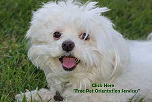 Free Pet Orientation Services by pet sitters