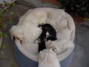 Bob and Puppies