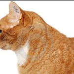 Prevention of Lost or Missing Pets