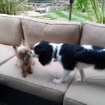 doggie friends Danville, CA