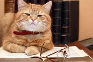 Cat Read Pet Sitting Reviews