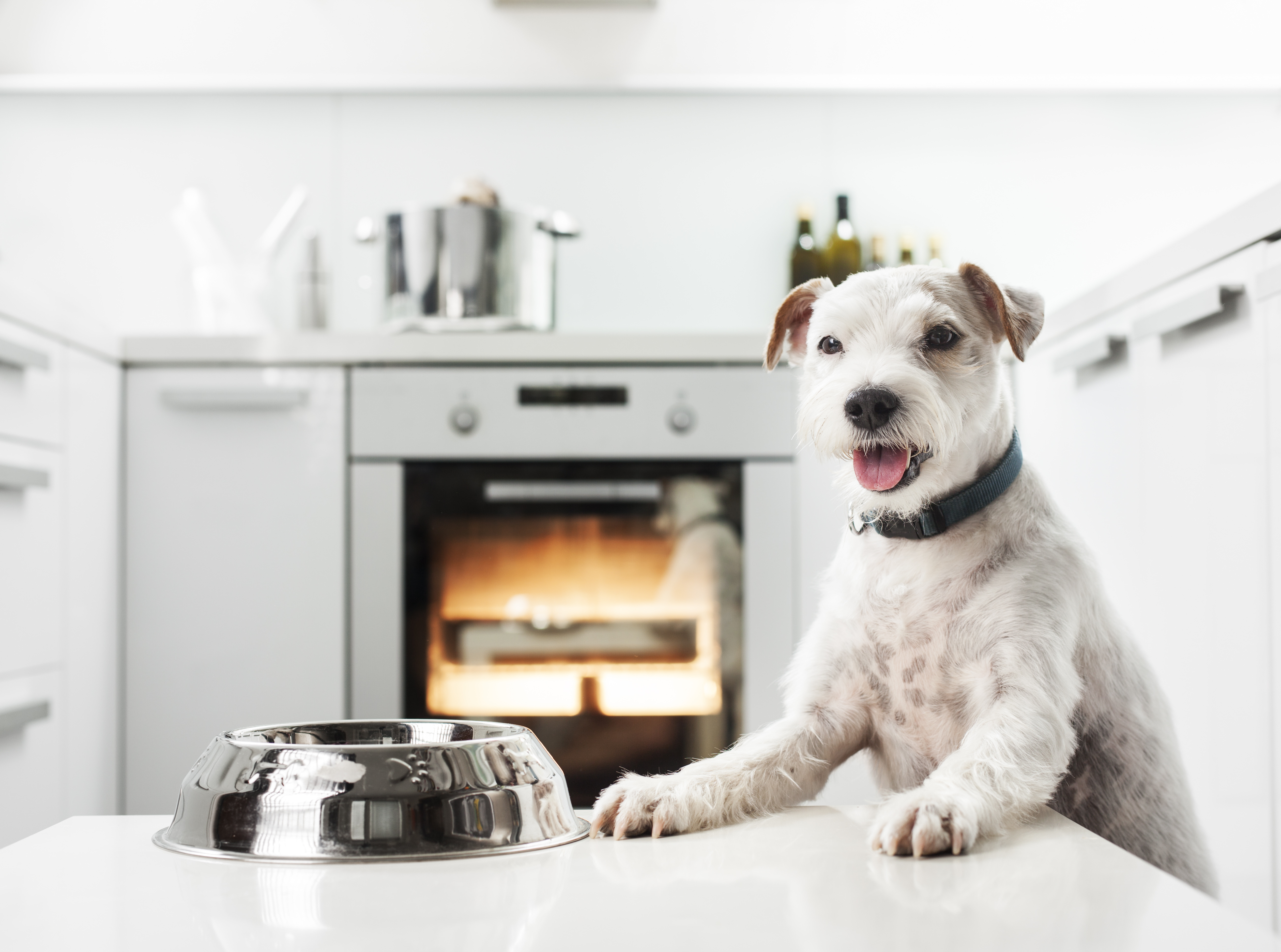 What is happening to your dry pet food?